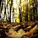 Herbst by gutlaunefotos ☮