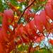 P1010267 - Autumn