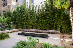 courtyard, backyard, shrub, grass, property, landscaping,
