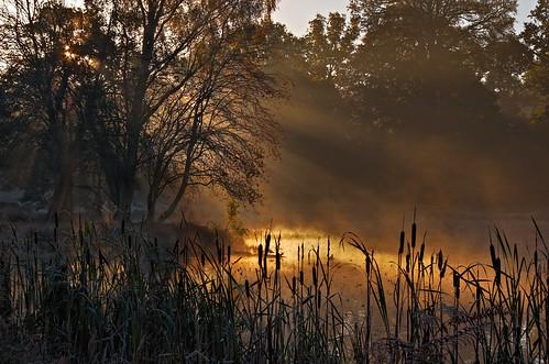 morning sun mist cold colour sunrise frost nt nationaltrust dunhammassey mistiness pentaxsmcda55300mm pentaxk5