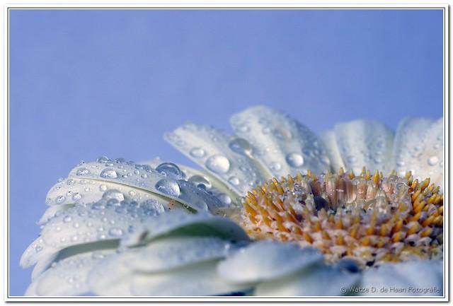 FV Flickr Top 5; 2-32: 13G59912-1