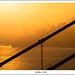 Golden City by Jiqing Fan
