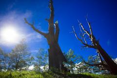 新中橫夫妻樹 -6