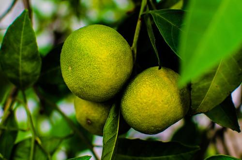 Naranjas 23