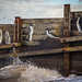 catman makes a splash in Whitstable by stocks photography.