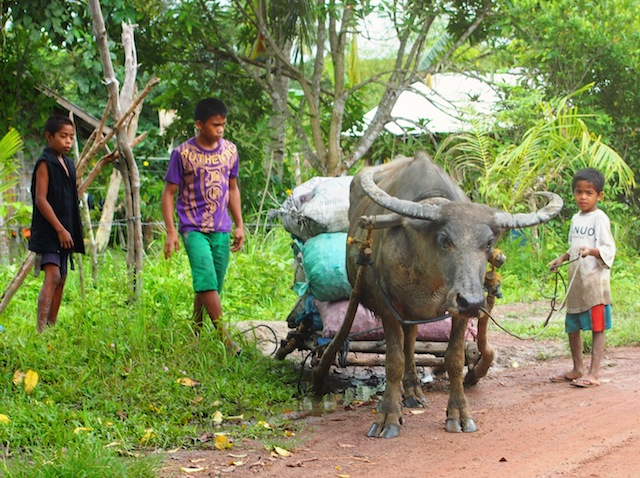 Carabao and kids in El Nido Palawan