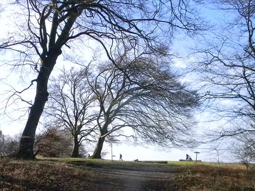 Whyteleaf Hill