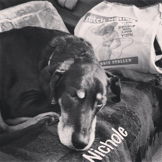 I even put my name on my seat and she STILL steals it, lol #dobermanmix #ilovemydogs #dogstagram #stitchnbitch #knitstagram #knittingbag #dobiemix