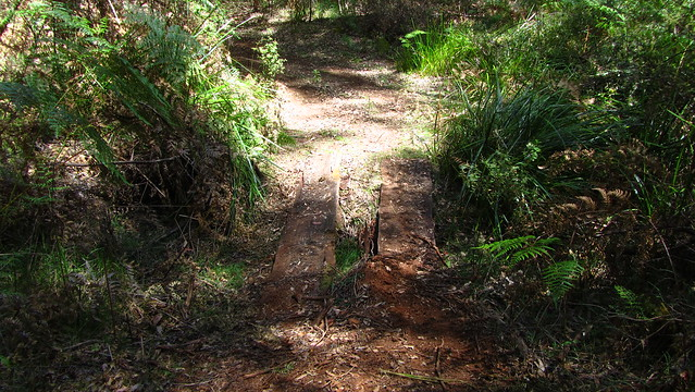 """Day 29: Typical """"watercourse"""" on the Bibb"""