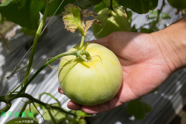 綠翠微農場--無毒美濃瓜 (15)