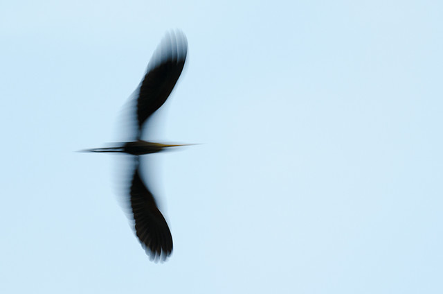Flying Form