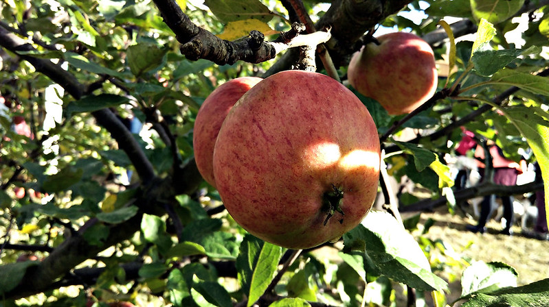 Apple day 2016-apple2