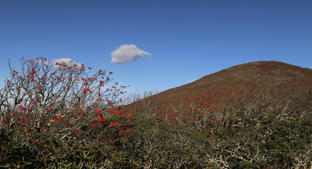 WILDFLOWER LANDSCAPES - Mountain Ash and Catawba Rhododendron - A Plant Community on the Blue Ridge Parkway