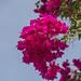Arbre feuille rose