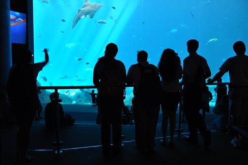 Georgia Aquarium - NSLC at Georgia Tech
