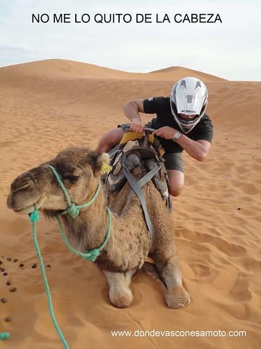 08-Camello