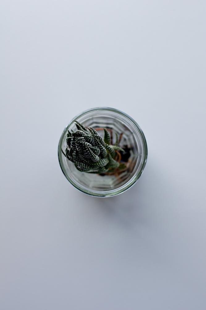 a succulent affair
