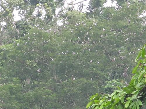 Gilbert parc au perroquets