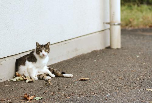 06_streetcat