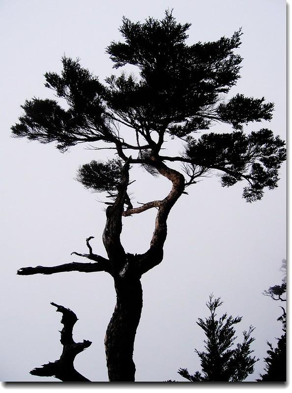 鐵杉武影 3