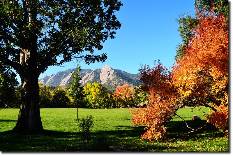 Maple in Fall, Chautauqua park, Boulder (18)