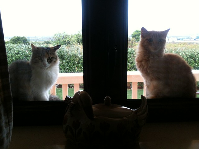 cat watchers 2