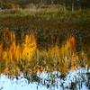 Coucher de soleil au marais...!!!