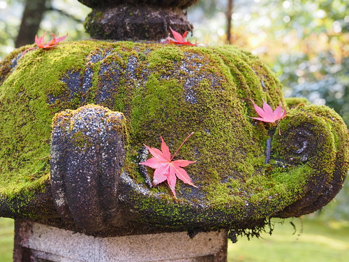 西明寺 灯籠と紅葉