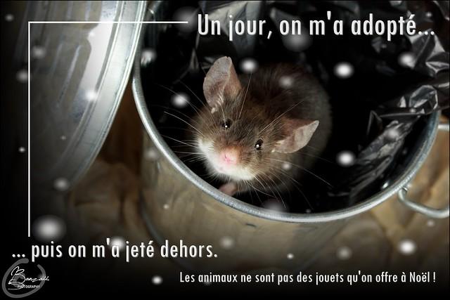 Affiches contre l'abandon et pour le respect de l'animal... 11015815403_a6d9689a43_z