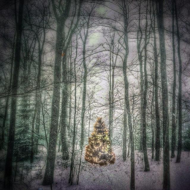 Ingraham Christmas Tree Farm