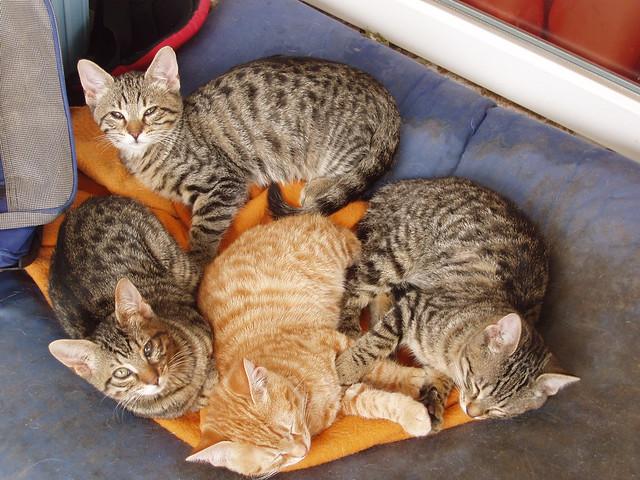 201012140068_Sam-Jan-kitten-mandala