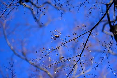 枝に浮かぶ葉 by leicadaisuki