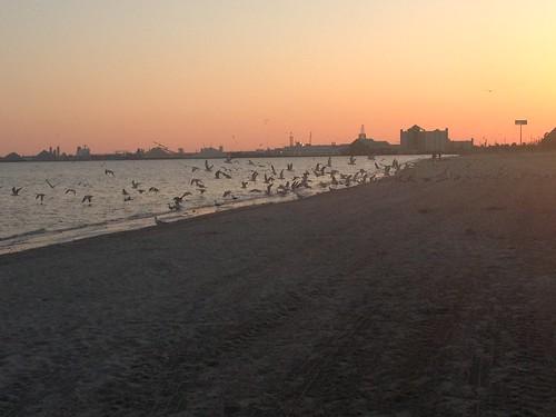 sunset birds coast sand louisiana lakecharles