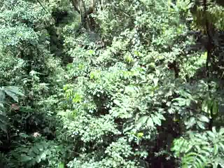 Zip-lining through the canopy
