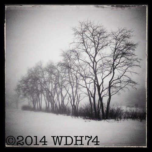 Winter Fog by William 74