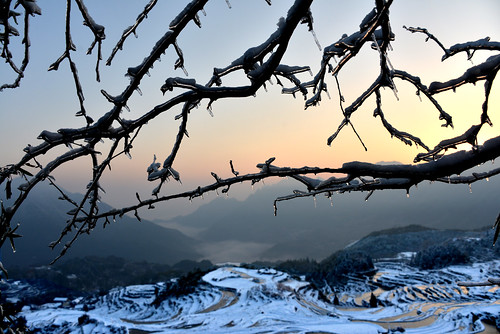 china morning winter white snow plant cold reflection tree heritage water weather rural sunrise golden countryside branch village snowy farm country mel layers melinda agriculture zhejiang 浙江 梯田 chanmelmel melindachan 雲和梯田 雲和