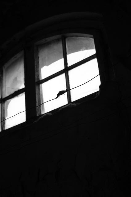 Beelitz_Heilstätten_2014_150