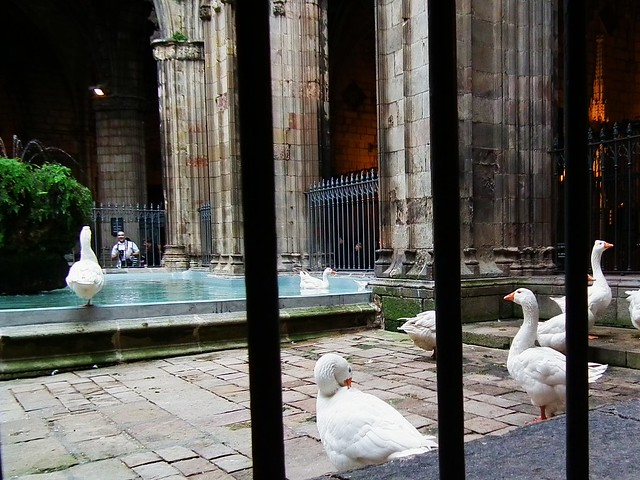 Well of the Geese - Catedral Basílica Metropolitana de Barcelona, Spain