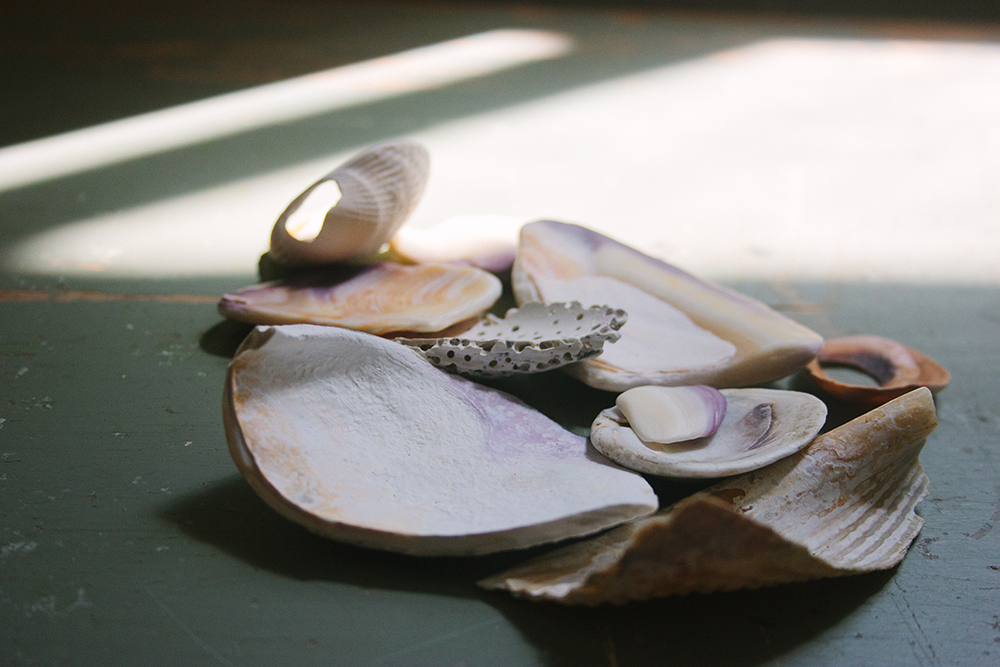 seashells_1