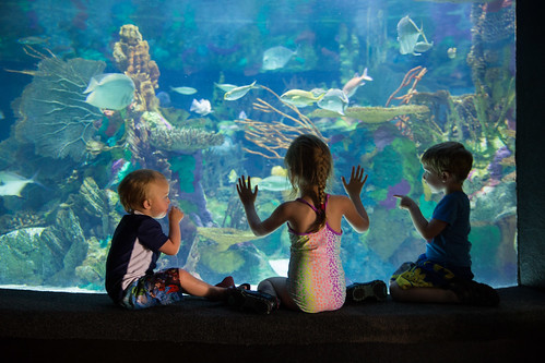 Kids Looking at Aquarium at SeaWorld #BBBestSummer #Shop
