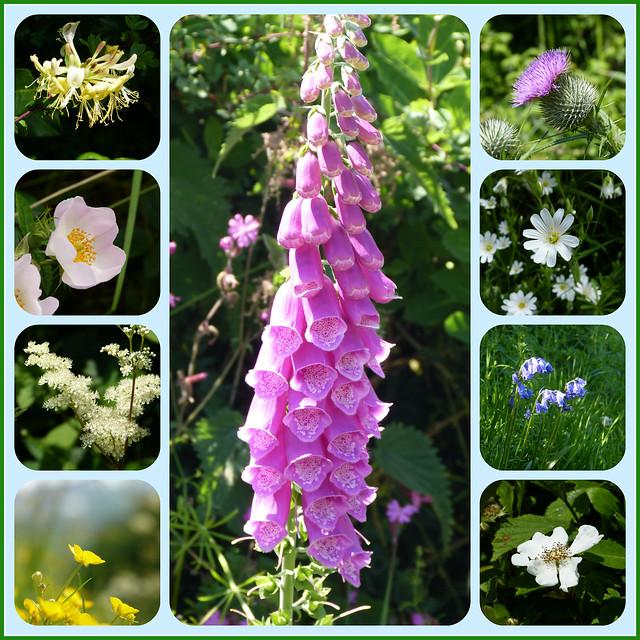 Whitstone Wildflowers
