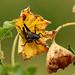 Orthoptera por Pablo Leautaud.