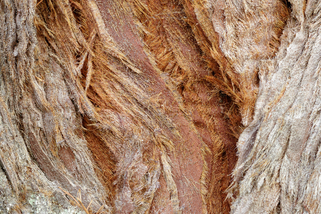 The bark of a redwood tree