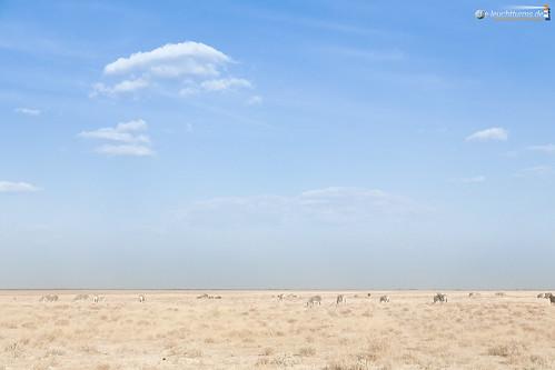 3x2 africa afrika equidae equusquagga etoshanationalpark namibia perissodactyla pferde steppenzebra säugetiere unpaarhufer vertebrata vertebrates wirbeltiere mammals oshikotoregion
