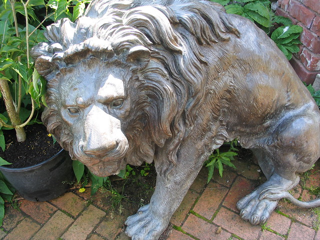 Slightly scared-looking lion,