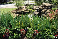 botanical garden, flower, garden, grass, fish pond, yard, landscaping, pond,