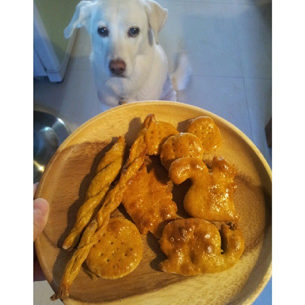 20130927 媽媽沒有騙人,球的南瓜燕麥餅干出爐。(本狗表示:拍完了沒??)