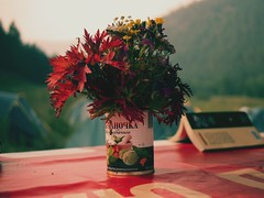 vase, camping in a field of wildflowers