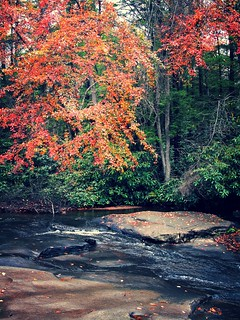 Swallow Falls SP ~ Muddy Creek