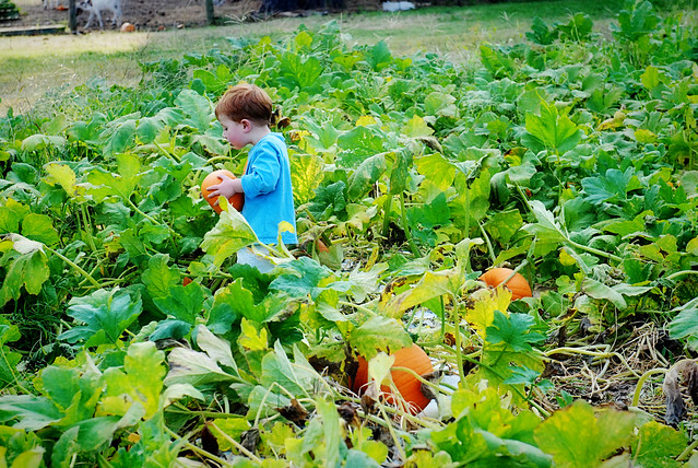 ganyard hill farm pumpkin patch